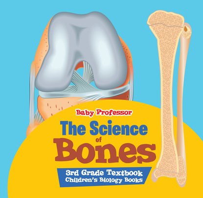 The Science of Bones 3rd Grade Textbook   Children's Biology Books