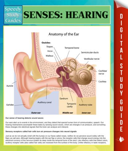 Senses: Hearing Speedy Study Guides