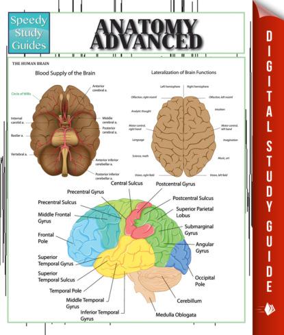 Anatomy Advanced